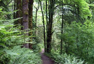 C:\Users\Steve\Downloads\wildwood_trail.jpg